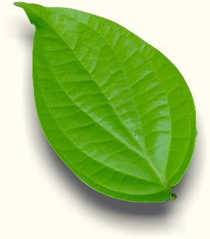 Petua dari tumbuhan 2